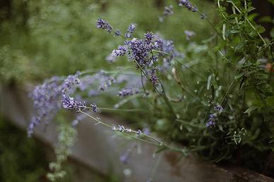 BeMindful-Lavender-Skincare.jpg