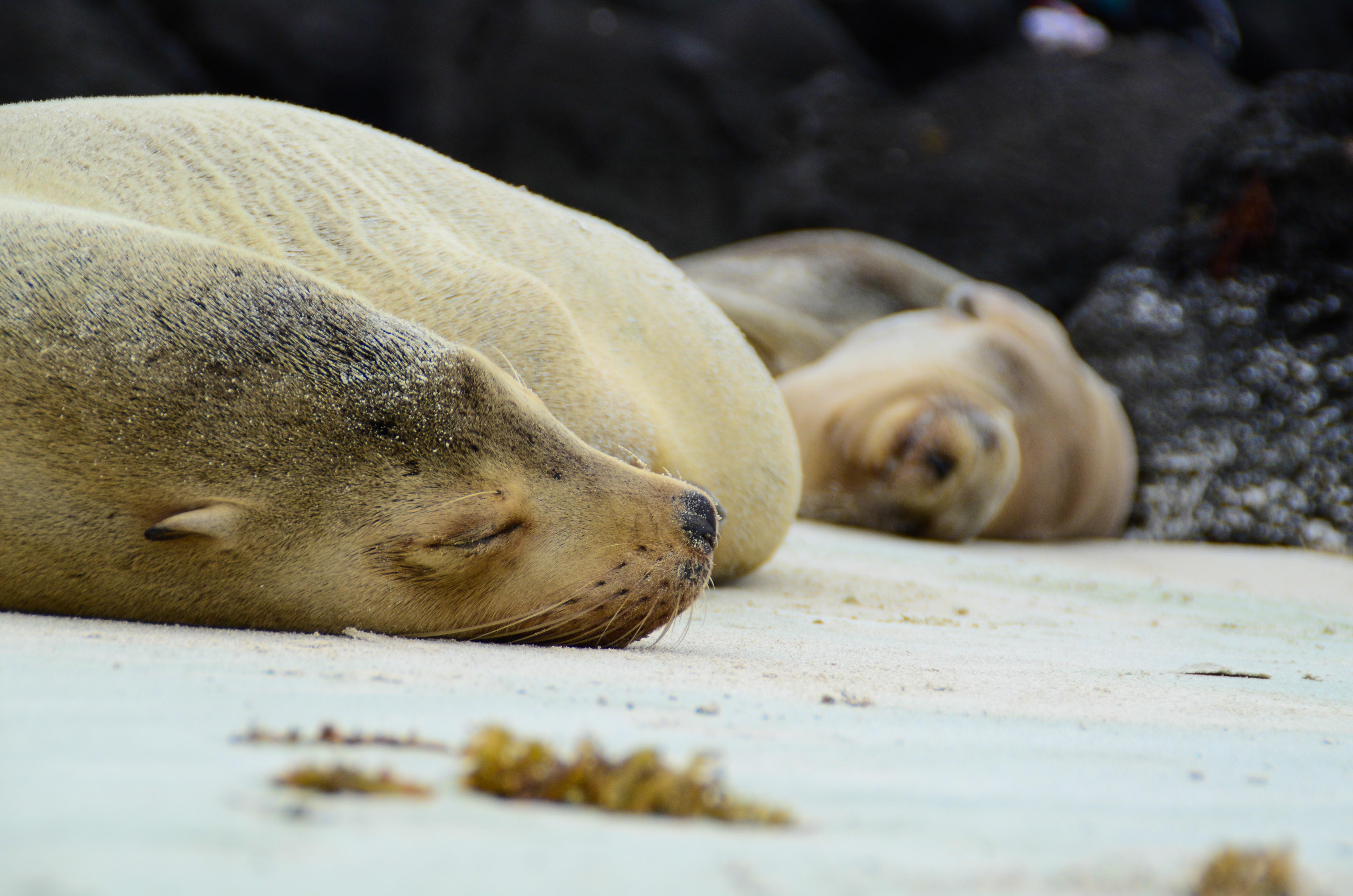 Sea lions at Lobería
