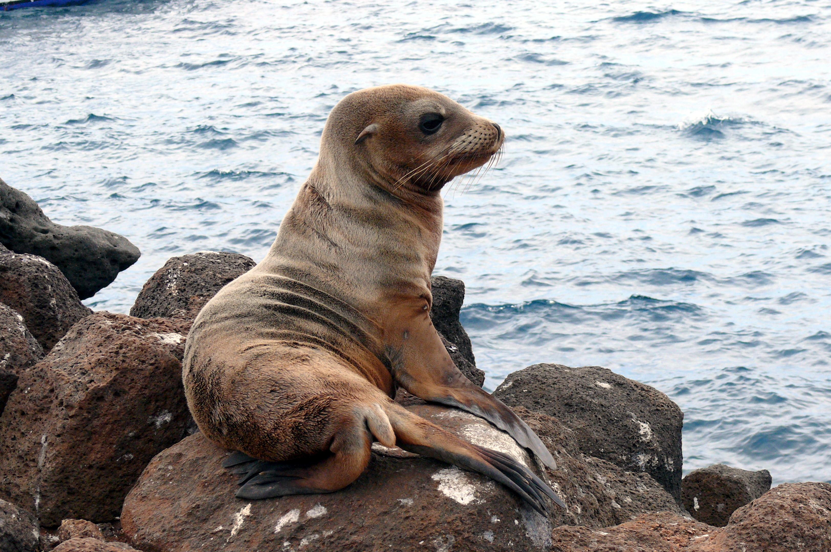 Sea lion cub