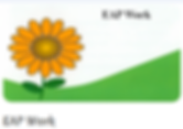 ProConsult.ie Flower Logo EAP Work Image Link