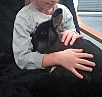 lapin nain adopté élevage familial bas-rhin