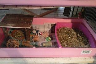 lapins, lapins nains, élevage, litière, foin, paille, aménager la cage du lapin, apprentissage, propreté, éducation