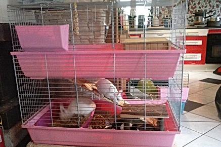 Aménager la cage d'un lapin, aménagement cage, élevage familial lapins nains