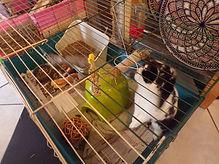 Lapins, lapins nains, lapin, lapin nain, chiens, chien, chats, chat, nouveaux animaux de compagnie, nac, rongeurs, élevage, familial, domestique, élevage familial, bas-rhin, imbsheim, bouxwiller, alsace, les lapinous, les lapinous 67, leslapinous67, alimentation lapin, alimentation lapin nain, aménagement cage lapin, aménager cage lapin, nourrir lapin, nourriture lapin, nourriture lapins, garde, pension, soins, soin, affection, promenade, balade, promenades, balades, sorties, sortie, lapins 67, lapins bas-rhin, lapins alsace, lapins bouxwiller, lapins saverne, lapins imbsheim, vend lapin, cherche lapin, qualité, bonne santé, petsitter, dogsitter
