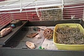Lapins, lapins nains, lapin, lapin nain, chiens, chien, chats, chat, nouveaux animaux de compagnie, nac, rongeurs, élevage, familial, domestique, élevage familial, bas-rhin, imbsheim, bouxwiller, alsace, les lapinous, les lapinous 67, leslapinous67, alimentation lapin, alimentation lapin nain, aménagement cage lapin, aménager cage lapin, nourrir lapin, nourriture lapin, nourriture lapins, garde, pension, soins, soin, affection, promenade, balade, promenades, balades, sorties, sortie, lapins 67, lapins bas-rhin, lapins alsace, lapins bouxwiller, lapins saverne, lapins imbsheim, vend lapin, cherche lapin, qualité, bonne santé