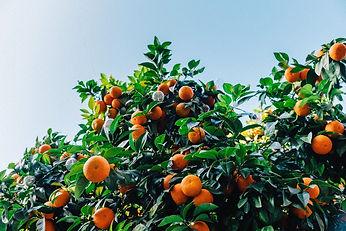 tangerines-1208301_1920_edited.jpg