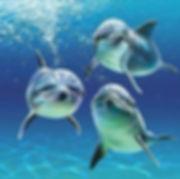 trois dauphins nous regardant dans l'eau