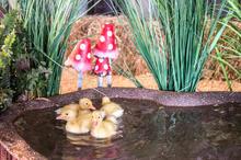 duckling land