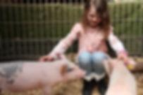 Pig Encounter