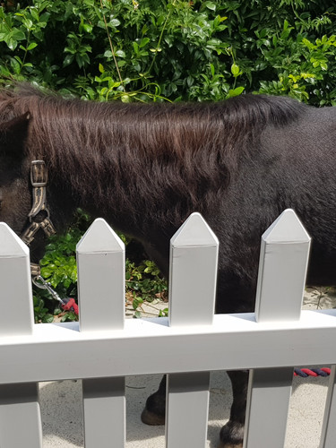 pony and picket fence.jpg