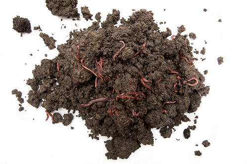 Compost Worms Starter Pack with Bedding – stress-free start