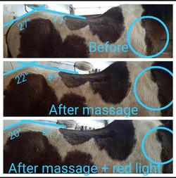 Massage and Red Light