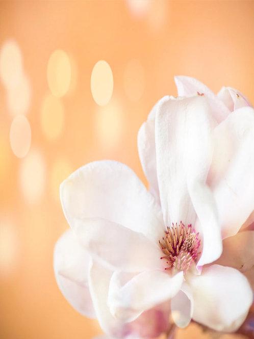 Peach Magnolia