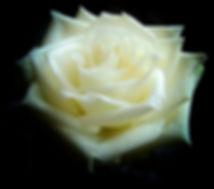 pexels-photo-235909.jpg