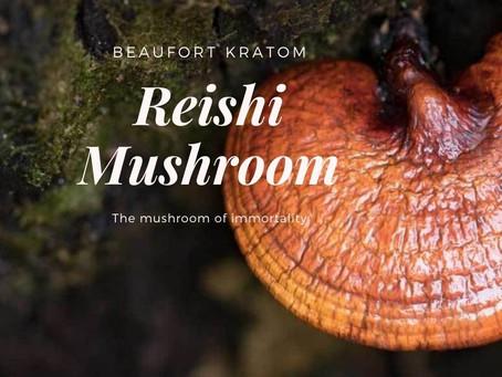 Reishi Benefits for Depression, Insomnia + Reishi Recipe