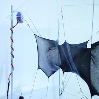 Carbon Prototype