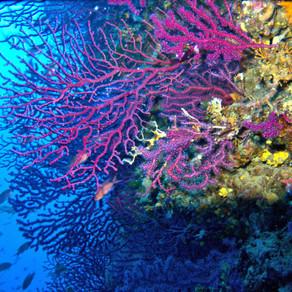 WWF: Μεσόγειος, μία θάλασσα που υπερθερμαίνεται