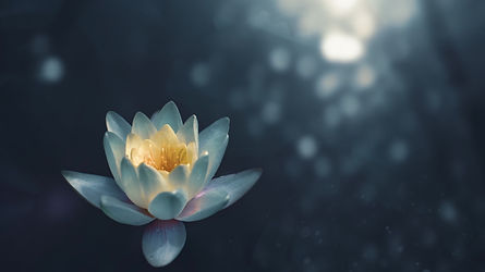Water lily_edited_edited.jpg