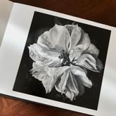 Beispielbild Fotobuch