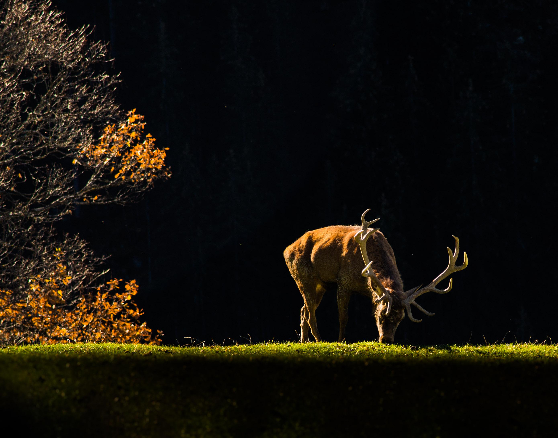 Naturfotografie | 2018