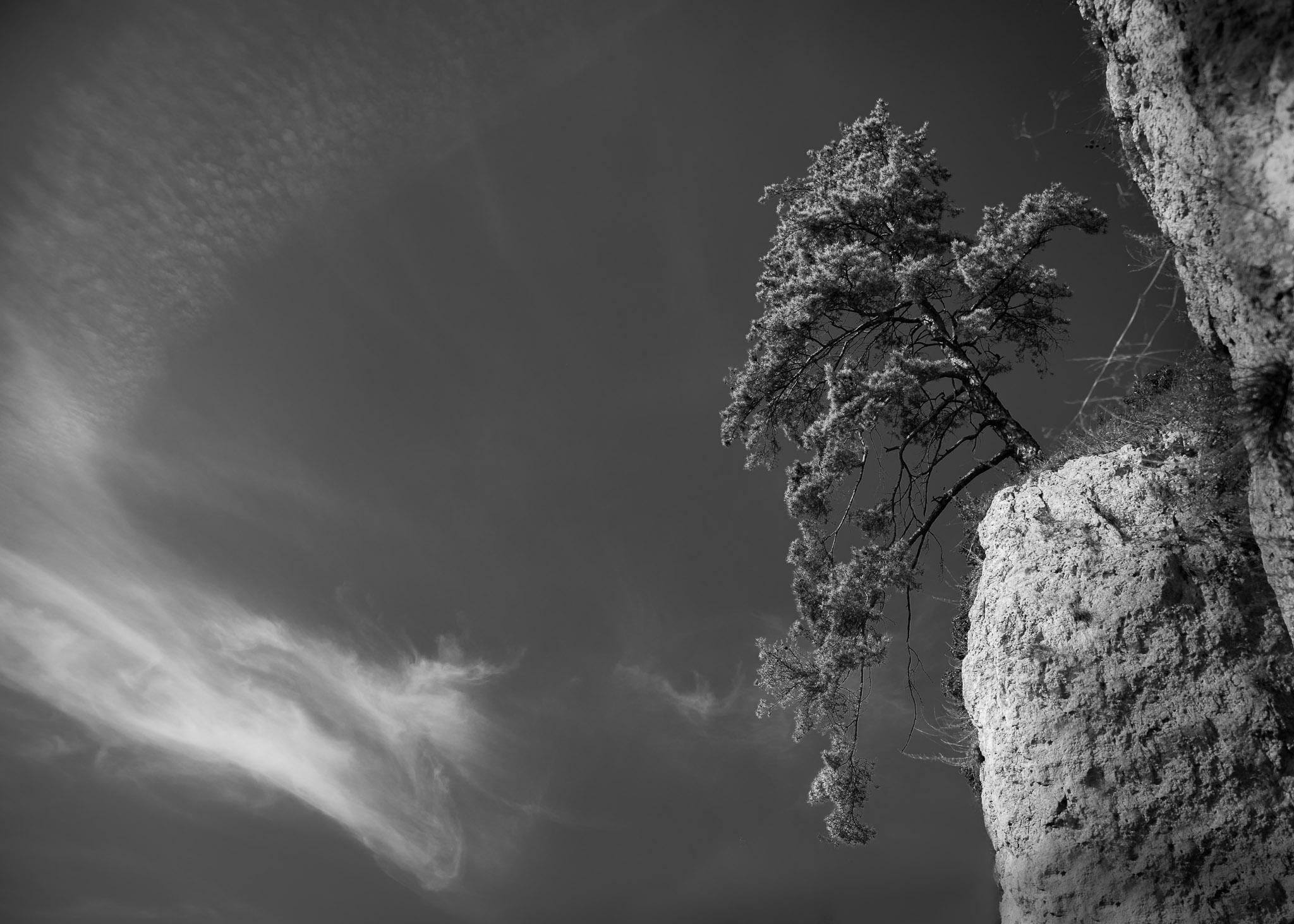 Naturfotografie | 2020