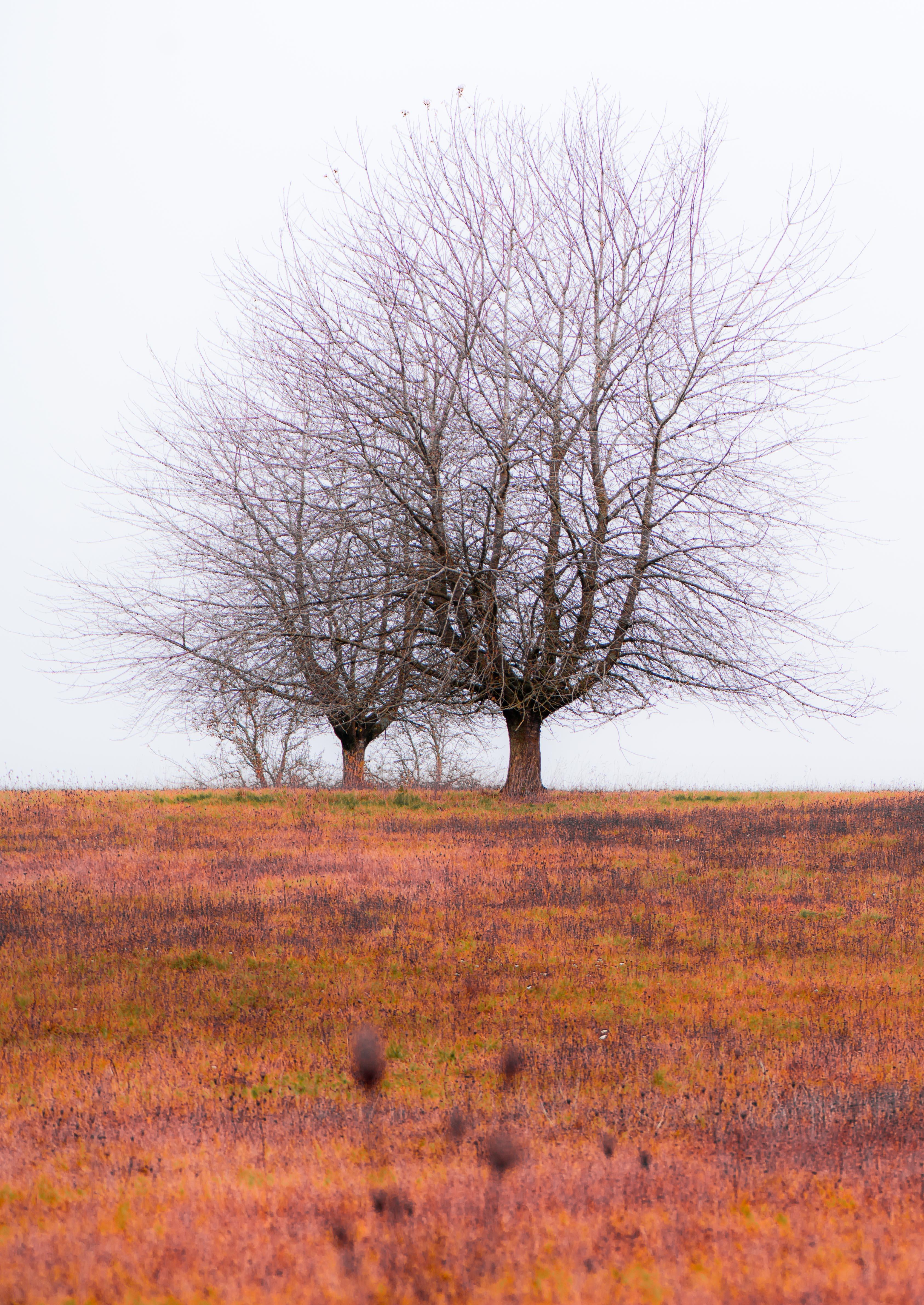 Naturfotografie | 2019
