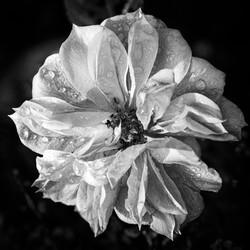 Blumenfotografie | 2020