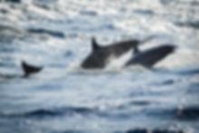 LUAR 040: giocare coi delfini