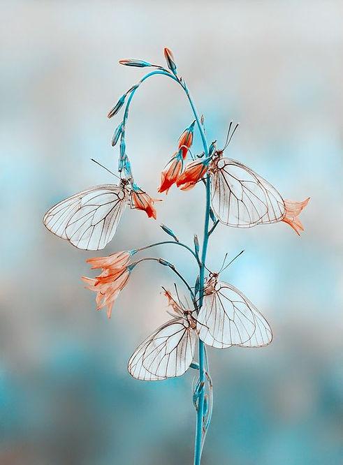 Papillons_tige_bleue.jpg