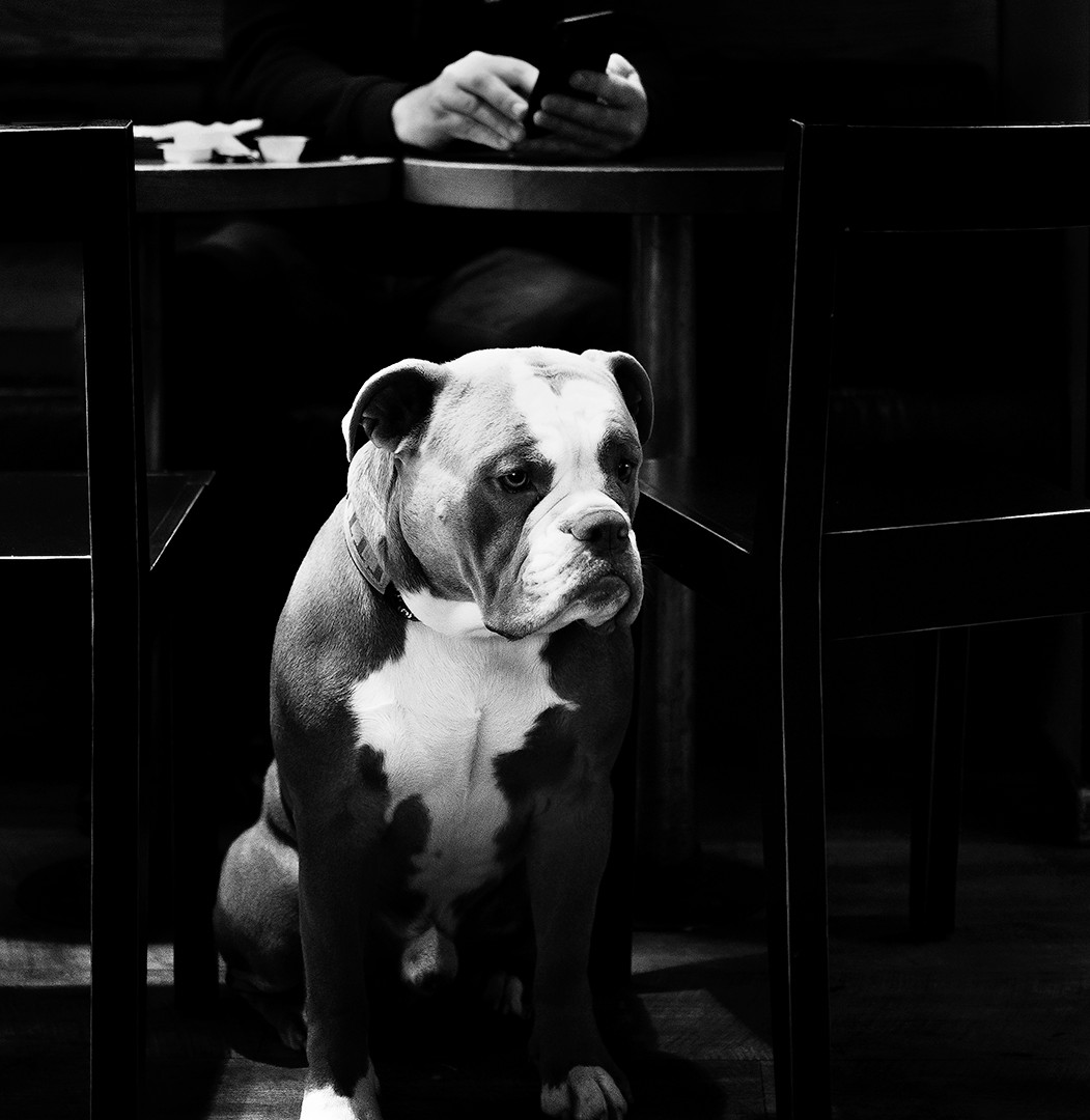 Waiting dog II