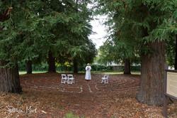 Redwood Grove Small Wedding