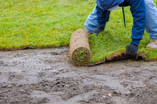 new-lawn-rolls-fresh-grass-turf-ready-be