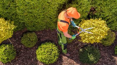 professional-gardener-at-work-XU82AHW_ed