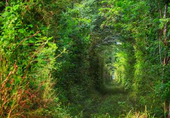 trees-alley-H4RE4VL.jpg