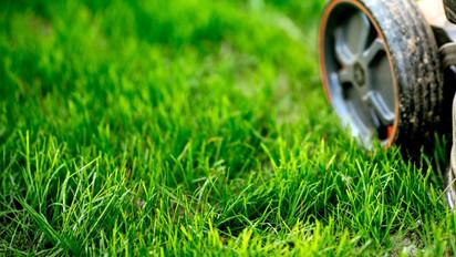 garden-maintainance-details-close-up-vie