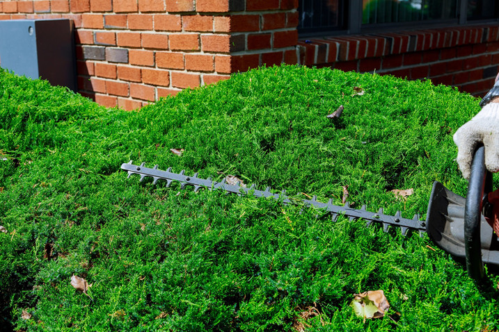 cutting-a-hedge-trimmer-in-the-garden-se