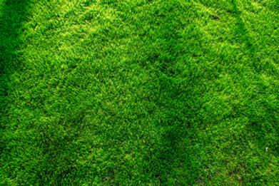 beautiful-green-lawn-NWV7XMY.png