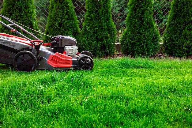 mowing-green-lawn-RR6Z3PU.jpg