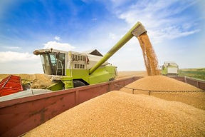 Combine harvester in action on wheat fie