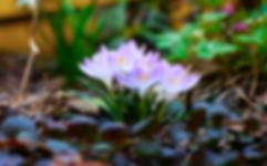 early spring.jpg