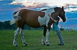 horse-2536537__340.jpg