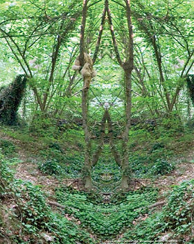 una-selva.jpg
