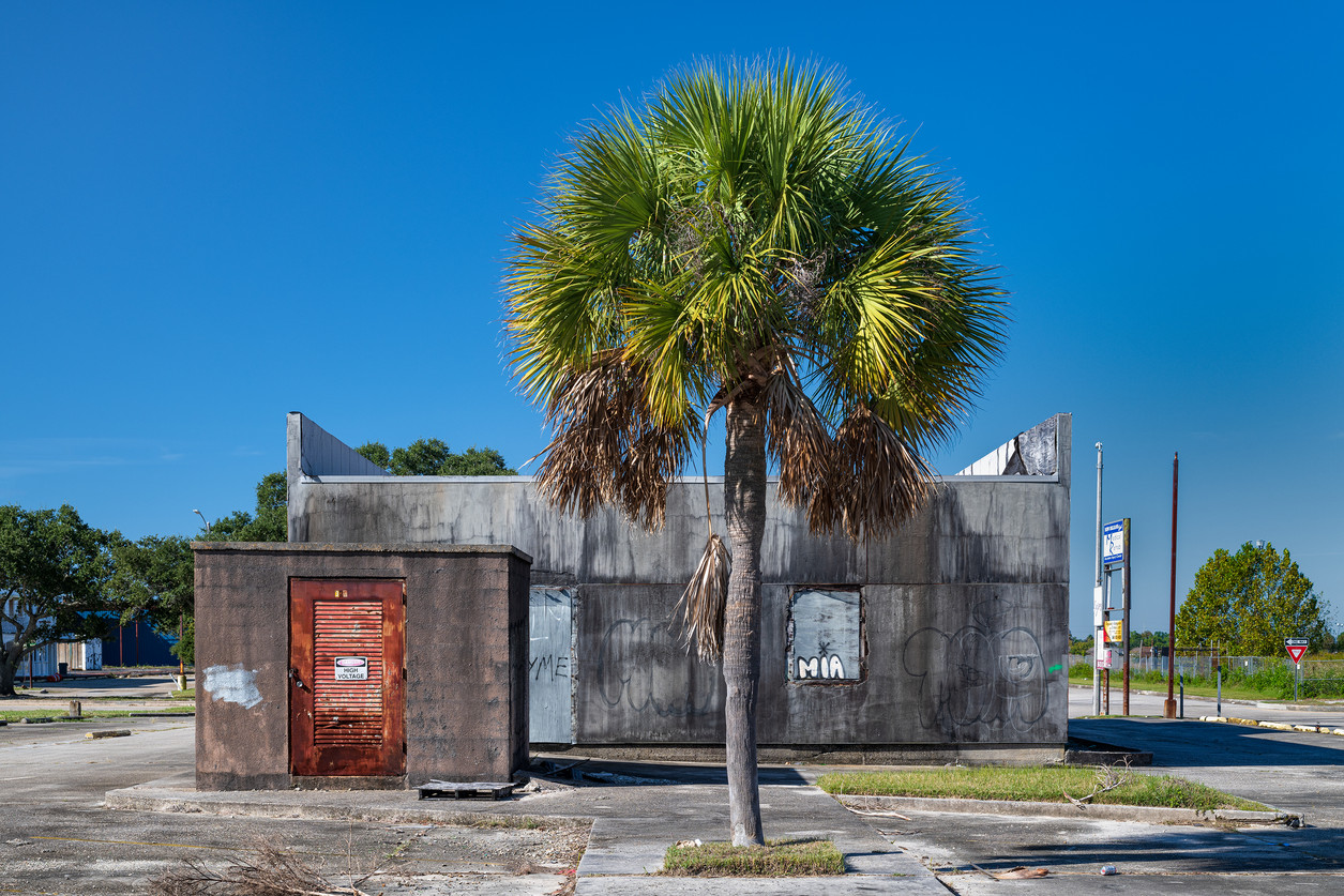 Palm, Lake Forest Blvd, New Orleans East