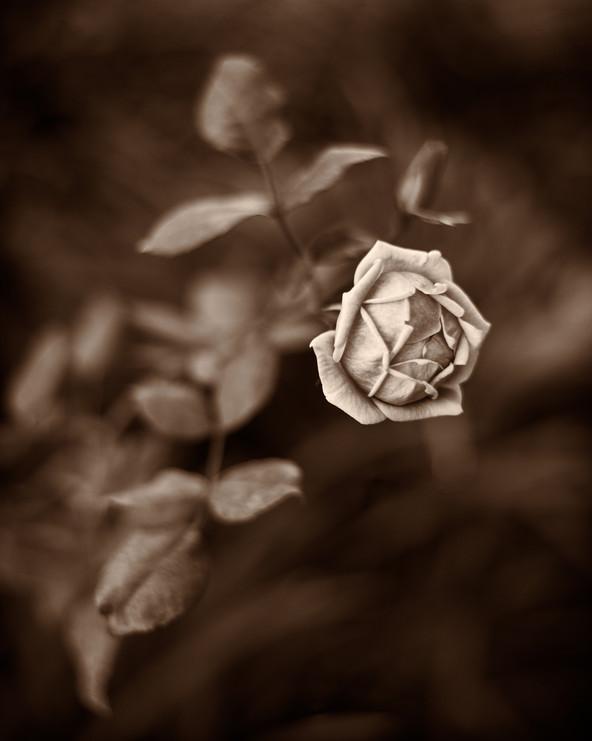 Untitled, Secret Garden, 2021