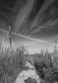 """""""Mares' Tails, Highway 90, New Orleans East"""""""