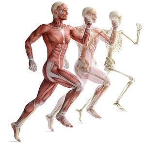 Ostéopathe sportif