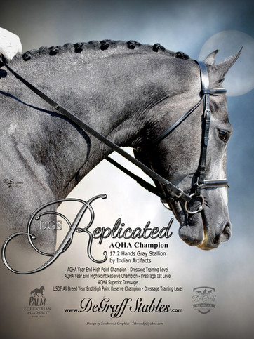 Poster-36x42 DGSR DressageHead #3 LP-100