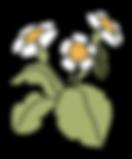 element_bloem 1.png