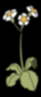 element_bloem 2.png