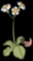 element_vogel_bloem 1.png